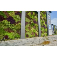 Exterior natural living walls without soil and manure